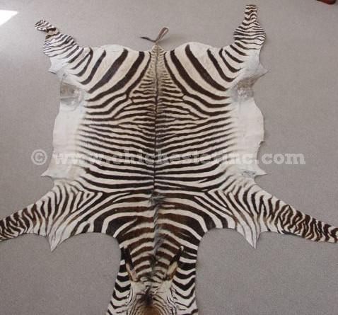 Genuine Zebra Rug Area Rug Ideas
